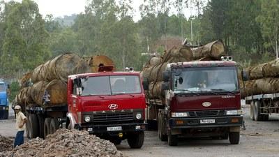 Ảnh minh họa xe chở gỗ từ rừng ở Đăk Lăk