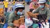 """""""Chó quyền"""" thua … chó má: nghĩ về vụ tiêu hủy 15 chú chó ở Cà Mau vì sợ """"lây lan dịch"""""""