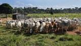 Lô hàng chở gia súc từ Brazil lần đầu cập cảng Việt Nam