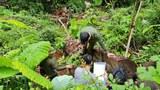 Các vụ phá rừng tại Gia Lai, Hà Giang có dấu hiệu liên quan đến lãnh đạo địa phương