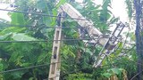 Hai người mất tích do bão Số 2- Koguma